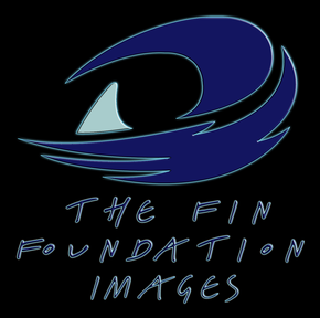 Fin Foundation Images